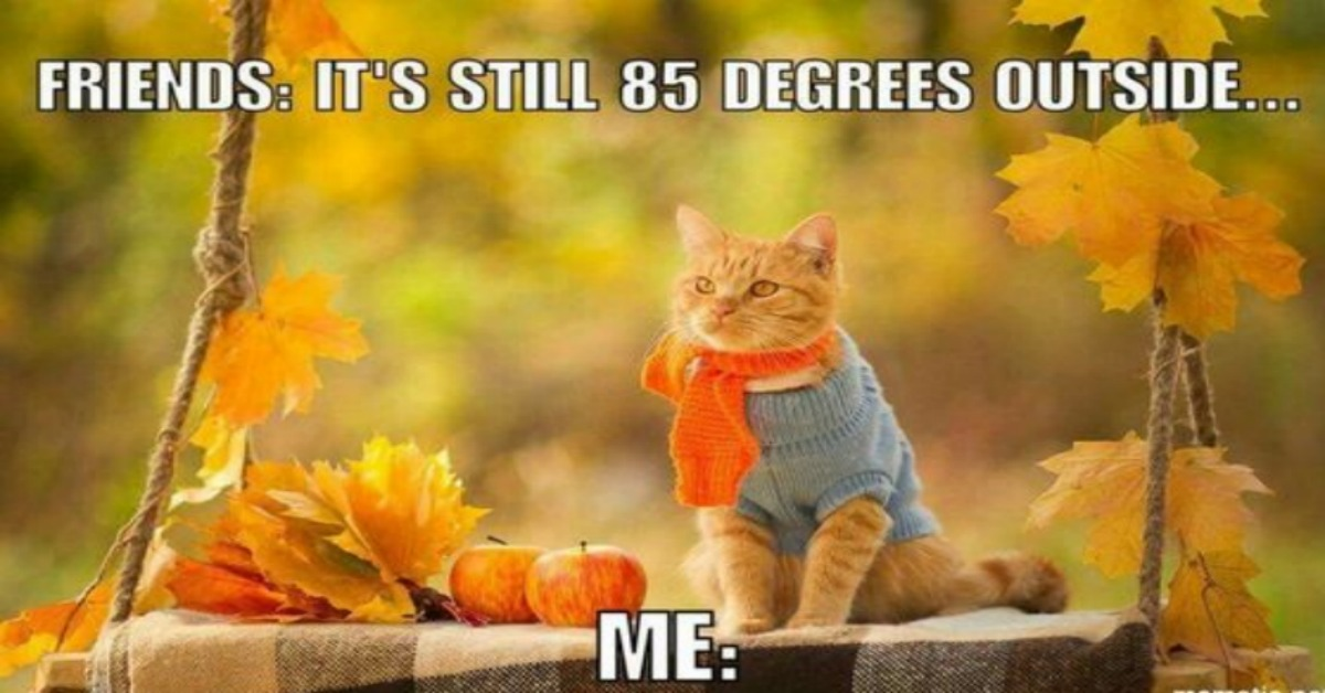 Fall Dessert Wallpaper Making Us Laugh This Week 11 Memes For Anyone Ready For Fall