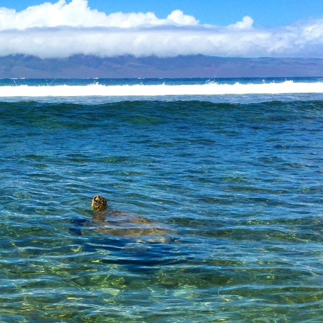 Sea Turtle, Ka'anapali Beach (photo by a fellow traveler)