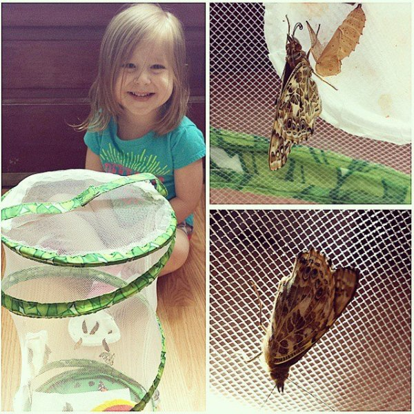 Avery and her Butterflies ready to be released
