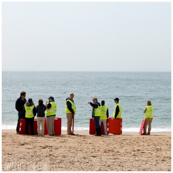 Mystic Aquarium Animal Rescue Team standing on the beach