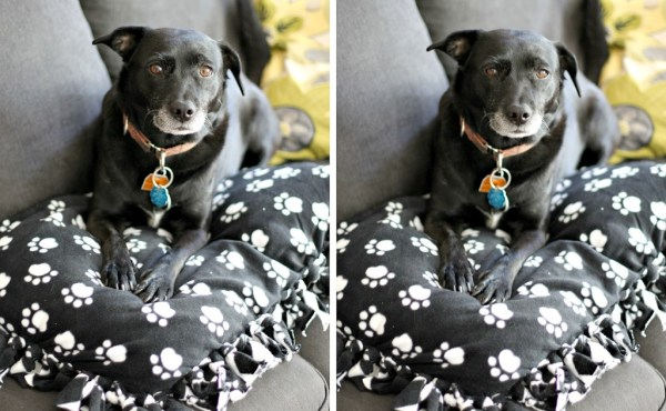 Easy Dog Pillow Dog Bed DIY