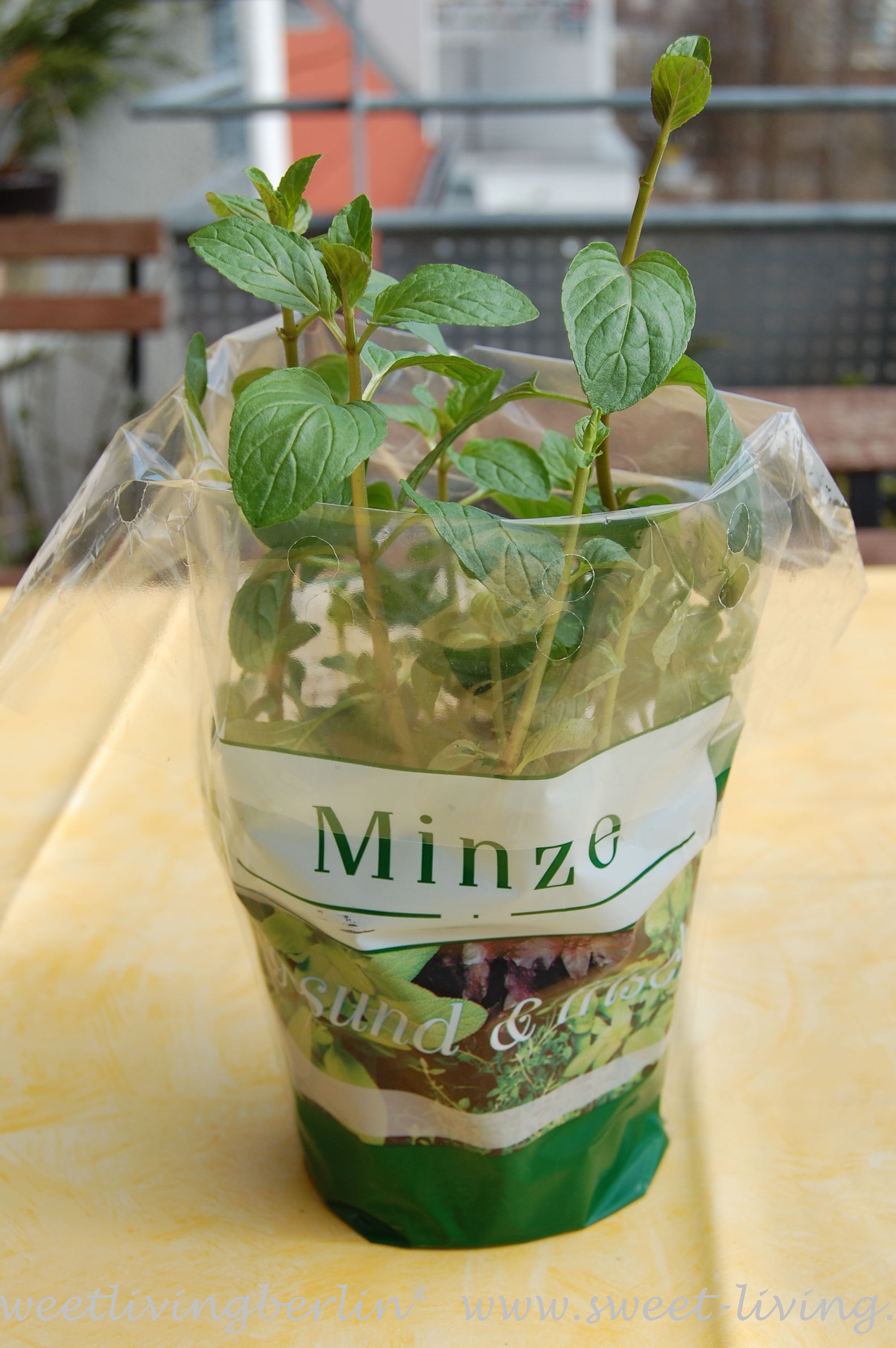 Frische Minze Foodfact Frische Minze Sweet Living Fine Art Of