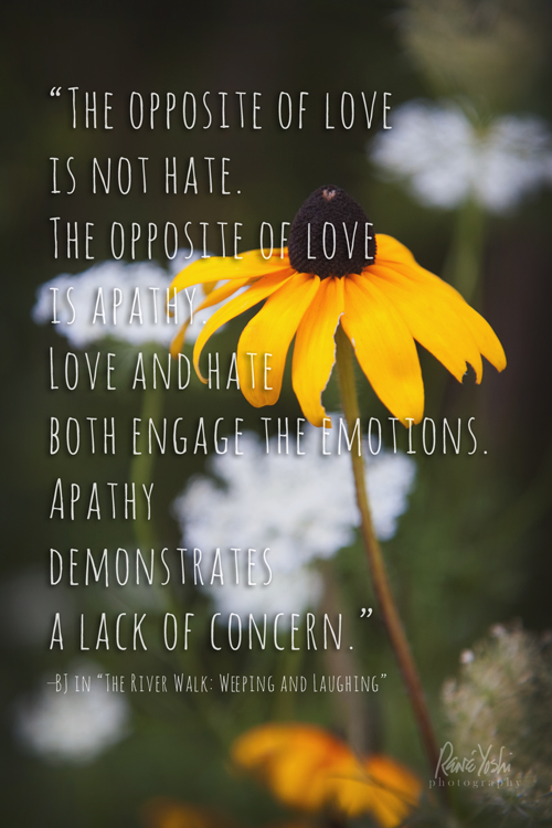 Sunflower Wallpaper With Quote The Opposite Of Love Is Not Hate Sweet Rains