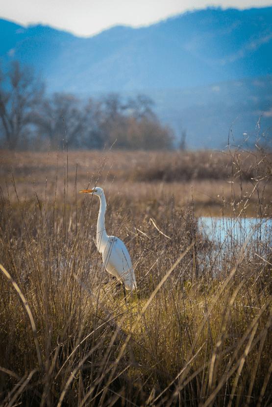 Sacramento National Wildlife Refuge | www.sweetteasweetie.com