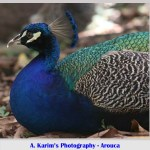 A Karim Photography