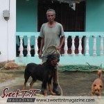 Manzanilla. A resident poses with his vicious rottweiler dog in sweet T&T for Sweet TnT Magazine, Culturama Publishing Company, for news in Trinidad, in Port of Spain, Trinidad and Tobago, with positive how to photography.