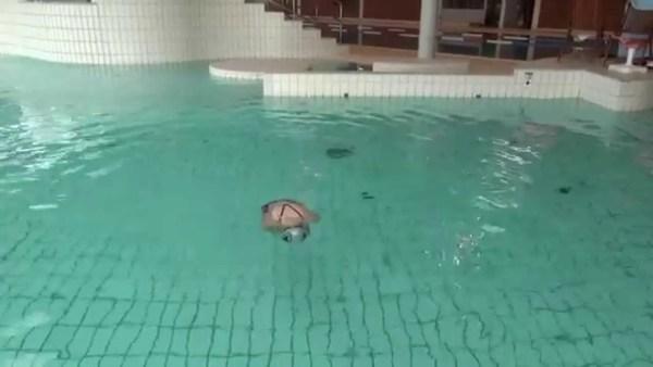 水中で身体を沈める感覚を身につけよう