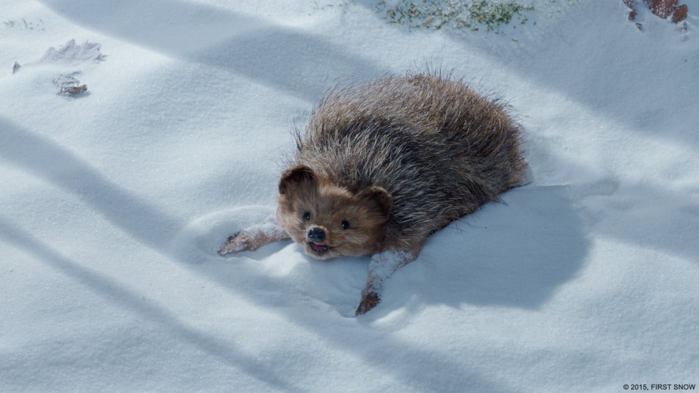 FIRST SNOW - HEDGEHOG