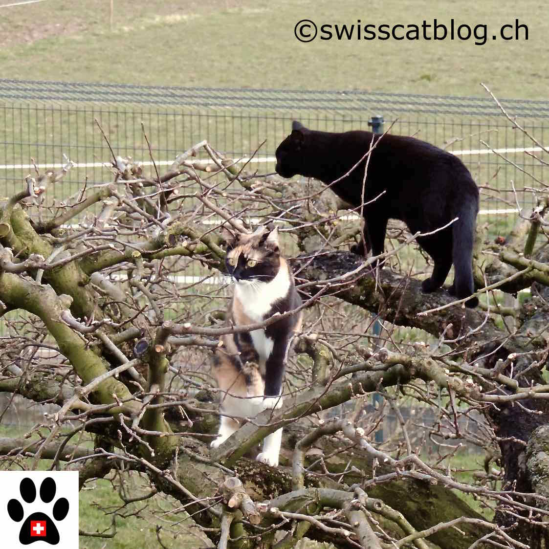 Recinzioni Per Gatti Giardino How To Enclose My Garden So That My Cats Can Safely Go Out