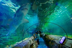 Discounted Sealife Aquarium Tickets with Sydney Central Backpackers