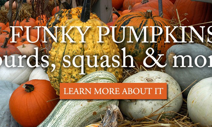 funky-pumpkins