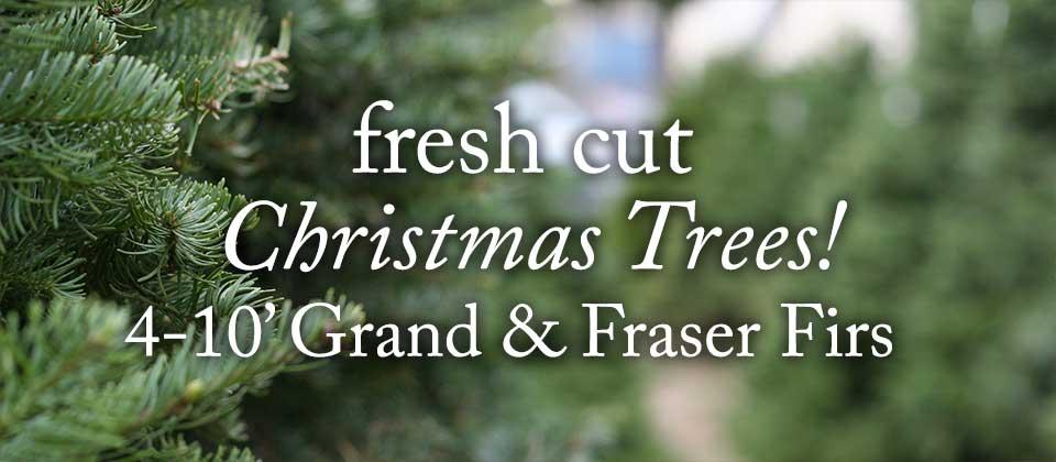 christmas-tree-slider