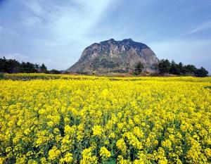 済州島の美しい風景。この地は方言がきついことでもよく知られる