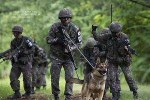 第3師団がよく行なっている「捜索・偵察」訓練(写真/韓国陸軍公式サイトより)