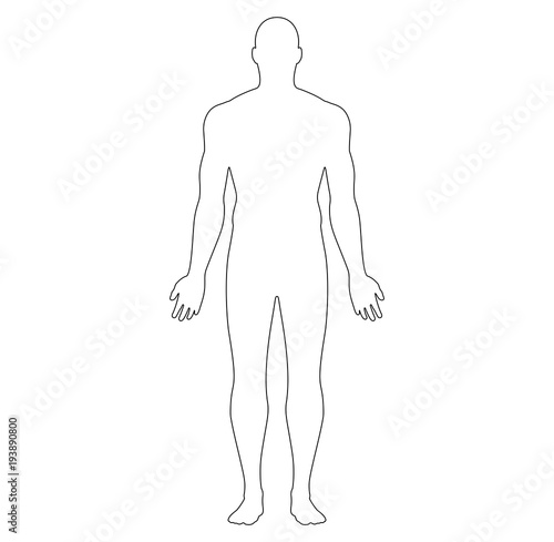 Anatomical Position Anterior View Male Body Vector Outline Buy