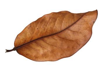 Fall Leaves Falling Wallpaper Photos Illustrations Et Vid 233 Os De Quot Feuille Morte Quot