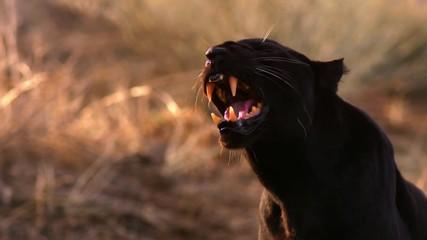Alphabet U Wallpapers 3d Search Photos Panther