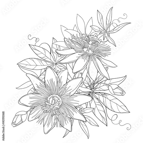 "Passionsblume Ranke ""vector Bouquet With Outline Tropical Passiflora Or"