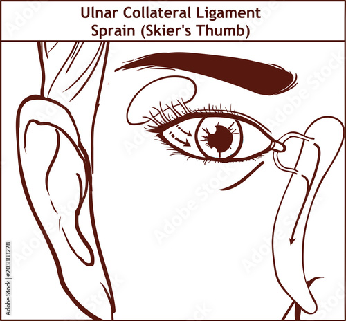 The lacrimal apparatus vector illustration\
