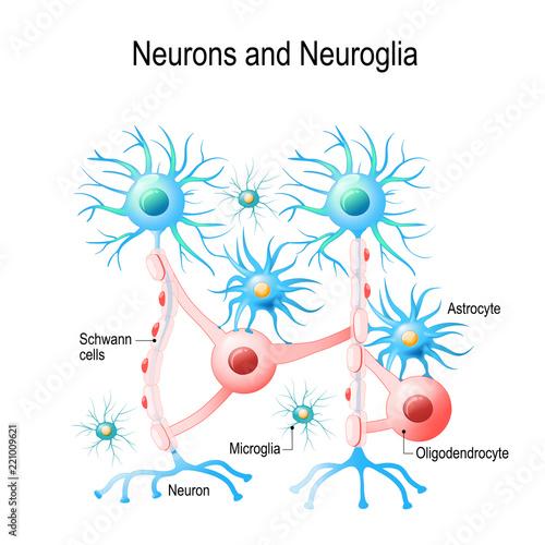 Neurons and neuroglial cells\