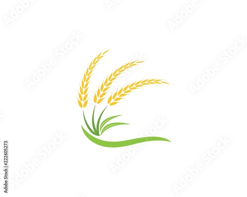 Wheat rice agriculture logo vector template\ - wheat template