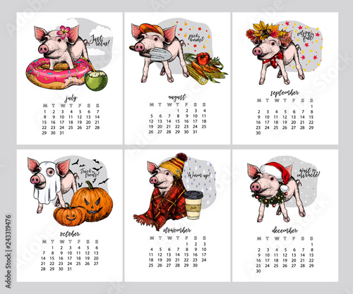Vector calendar with year symbol Six month pig July, August