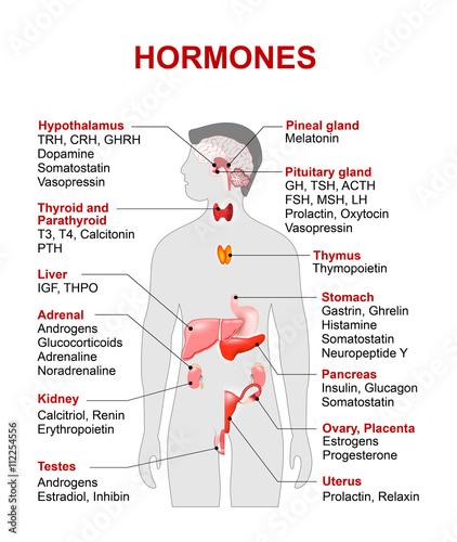 Endocrine gland and hormones\