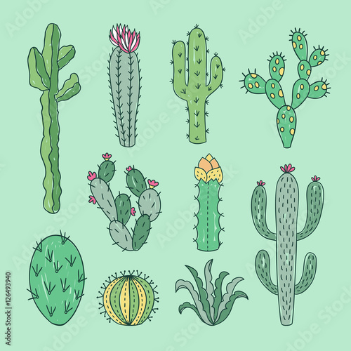 Cactus and succulents outline hand drawn illustration\