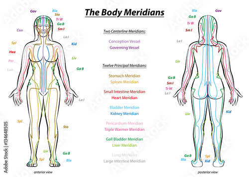 MERIDIAN SYSTEM CHART - Female body with principal and centerline