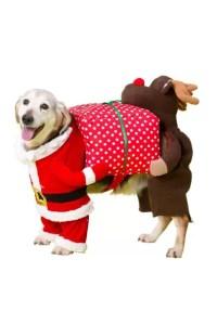 dog Christmas outfits 2016   Tatler