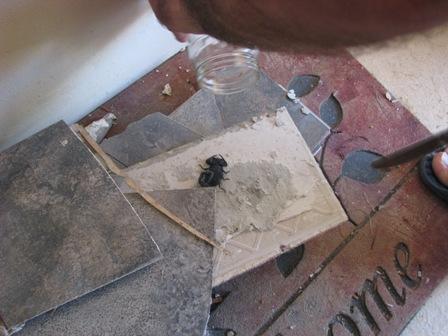 belize scorpions