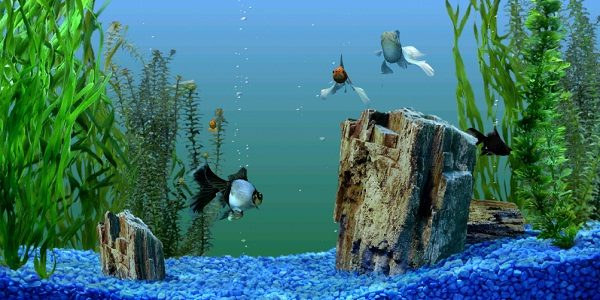 3d Cube Live Wallpaper Free Download Why You Should Use A Fish Tank Background The Aquarium Guide