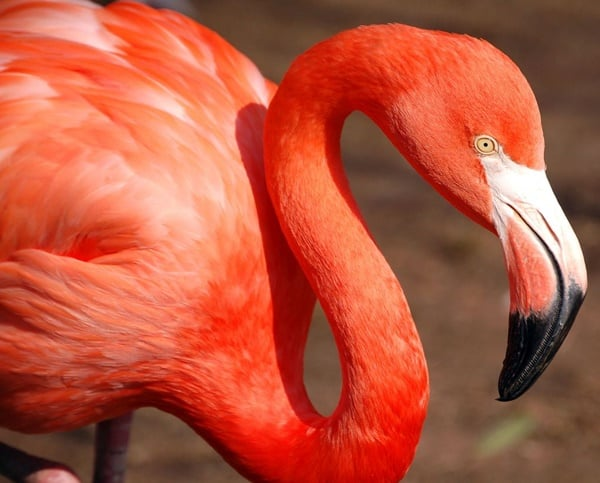 Fish Wallpaper Hd 40 Beautiful Pictures Of Pink Flamingo Birds Tail And Fur