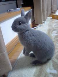 5 Dwarf Rabbits and Teacup Bunnies (Healthy Caring Tips)