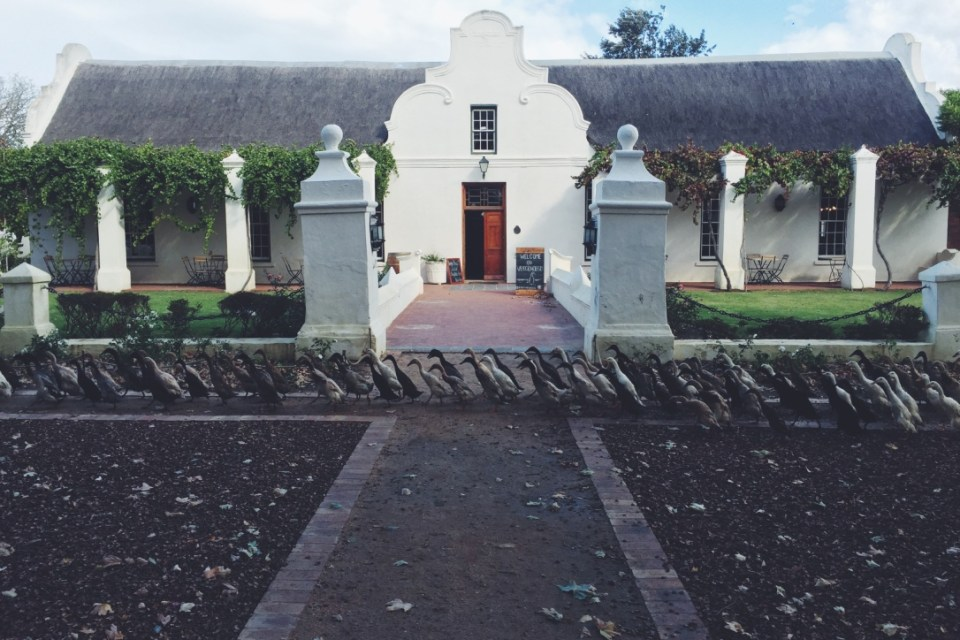 Vergenoegd Wine Estate Winter