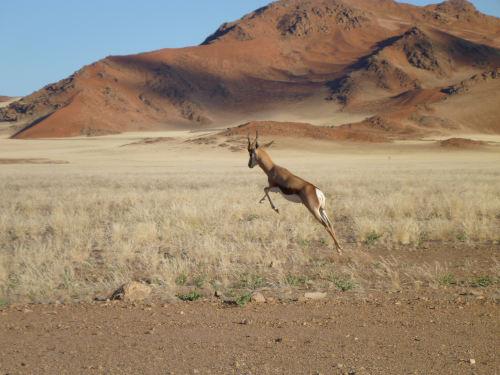 ナミビアナミブ砂漠2 (6)