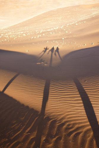 ナミビアナミブ砂漠2 (16)