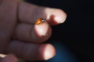 ladybug-794072_1920