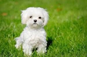 Daisy, a fluffy ball of fur