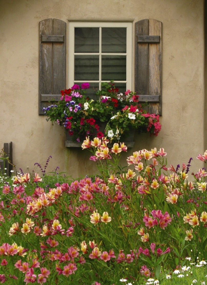Alstroemeria Flower In English Carmel's Cottage Gardens – Cont. | Once Upon A Time..tales
