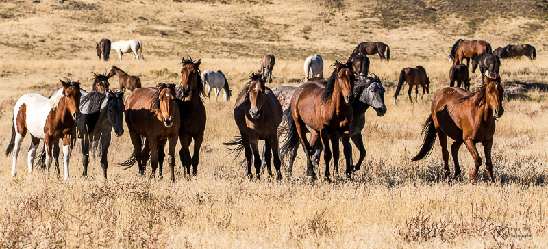 Wild Horse Week-Friends and Family Bands