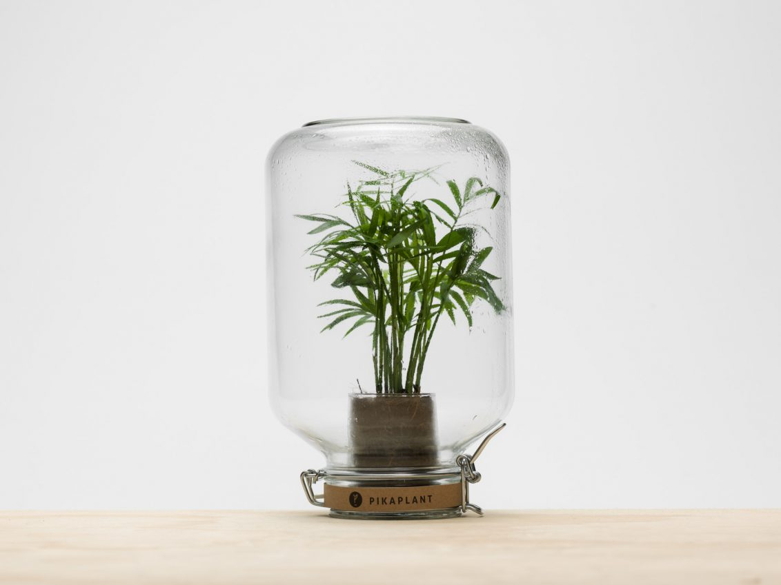 Automatisch Water Geven Planten Talking Objects — Pikaplant