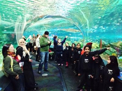 LE1-Nitis Field-trip to Ripley's Aquarium | TPS Classroom Pages