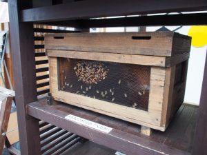ハチ 養蜂