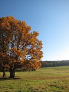 Herbst-tambach-dietharz-Thüringer Wald-thüringen