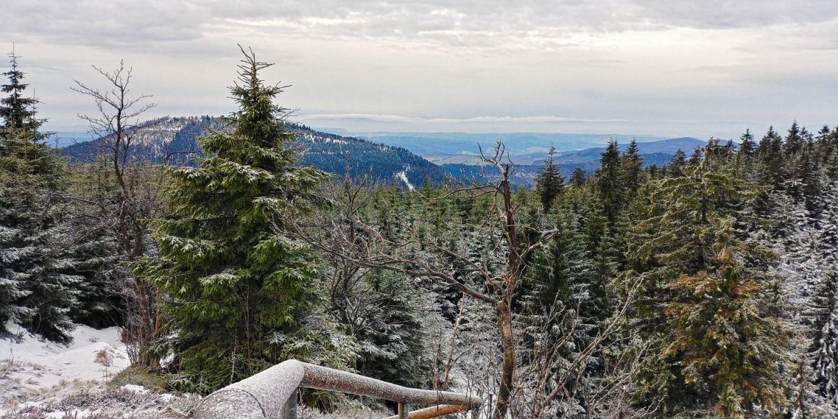winter-rennsteig-thueringer-wald-ski-langlauf-tdaktiv-2