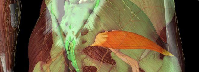 Pic of Sciatic nerve and Piriformis