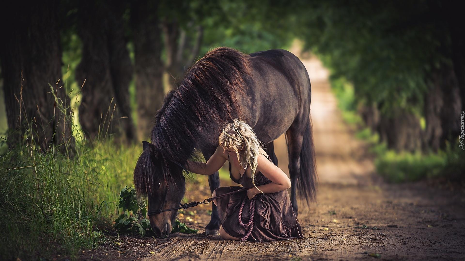 Fall Wallpaper Horses Droga Koń Dziewczyna