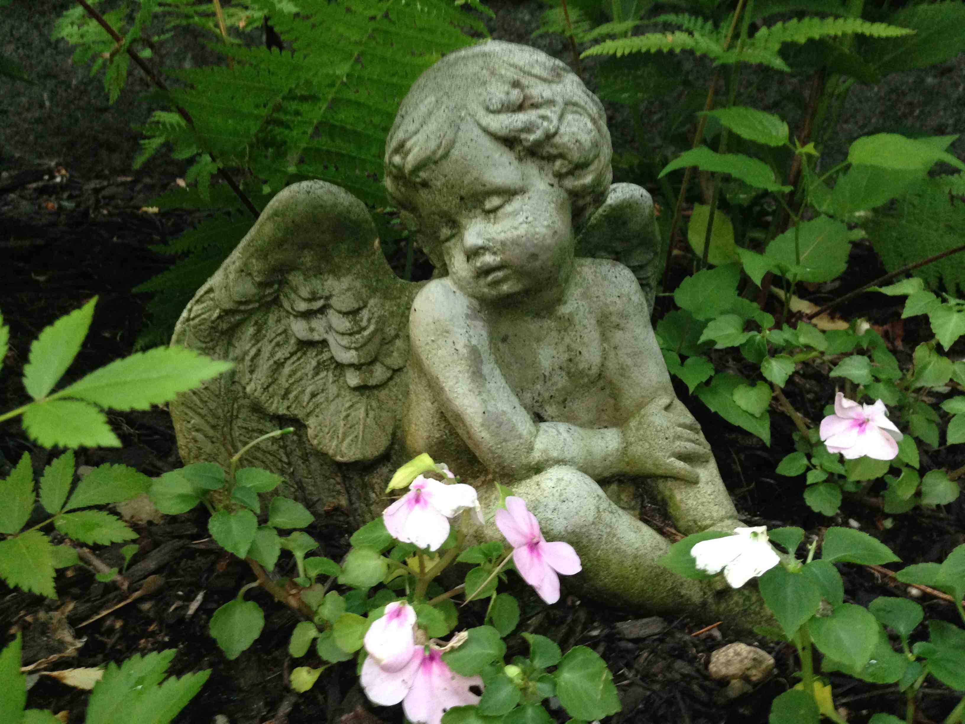 Garden Angel Blog Tara Cousineau Phd Part 5
