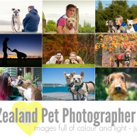Pet Photography Sessions